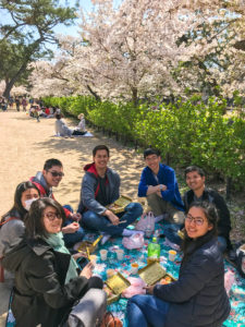 cherry blossom viewing picnic